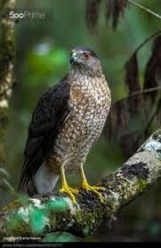 Hawk Birds. Types of Largest Eagles Species in The Worlds. Like Philippine Eagle, Bateleur Eagle, The Black Chested Buzzard Eagle, Harpy Eagle, Wedge Tailed Eagle, Steller's Sea Eagle, Golden Eagle, Bald Eagle, Martial Eagle, Crowned Eagle,and more. Follow and visit my website for more informations and pictures.