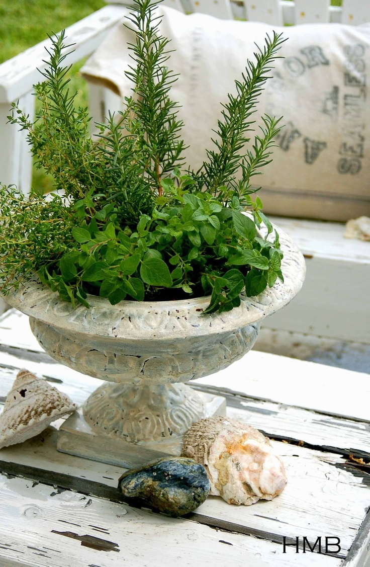 Rosemary, oregano & thyme in a cozy urn: Herbs Pots, Herbs Plants, Gardens Gardens, Herbs Gardens, Urn Herbs, Herbal Gardens, Gardens Urn, Gardens Herbs, Paintings Herbs