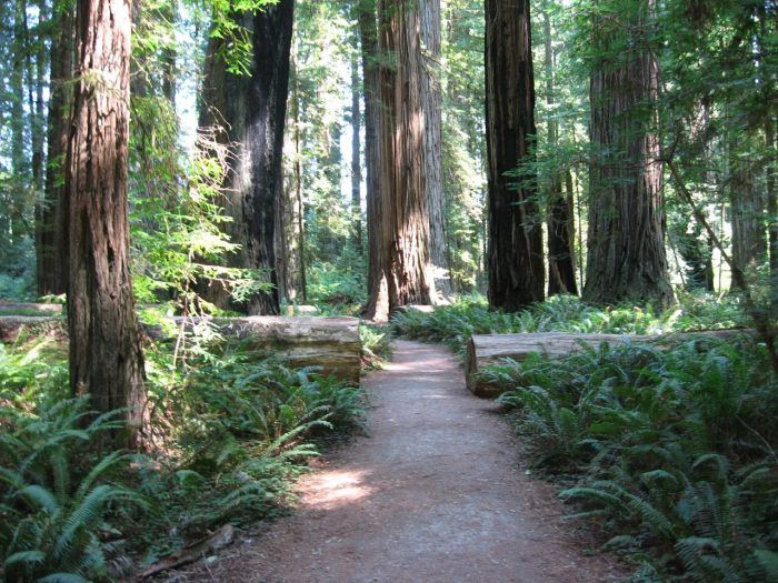 13 Incredible Hikes Under 5 Miles Everyone In Northern California Should Take