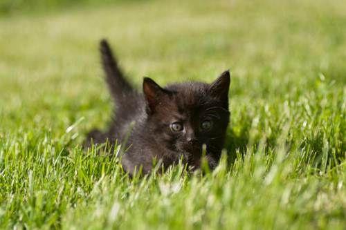 Festa del gatto nero 2012: oggi giornata di eventi e iniziative pro felini. Fotogallery a tema