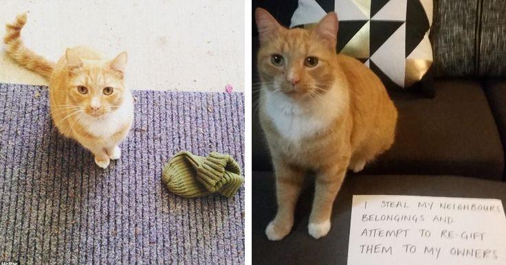 les 25 meilleures id es de la cat gorie chats roux sur pinterest b b chatons orange chats de. Black Bedroom Furniture Sets. Home Design Ideas