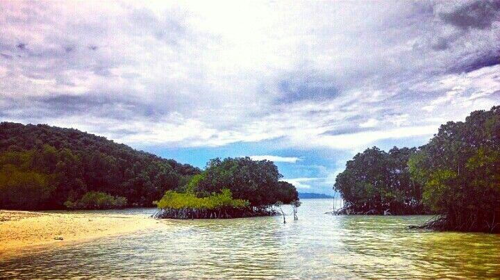 Mangrove, back to nature