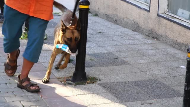 Man Training His Dog At The Street Stock Video Footage - VideoBlocks