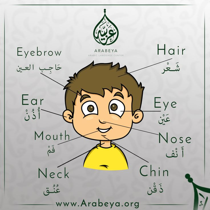 Parts of the face in Arabic Language