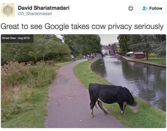 Google Street View Blurred This Cow's Face and Twitter Found It Udderly Hilarious