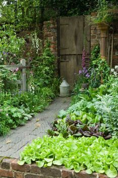 Harpur Garden Images Ltd :: 07mh112 The Old Gate . Gold Medal Best Courtyard Garden brick wall shelter roof raised bed of vegetables obelisk Lathyrus sweet pea broad beans carrots lettuce Digitalis watering can Design: Adam Woolcott and Jonathan Swift, AW Gardening Services RHS Chelsea Flower Show 2007 UK Marcus Harpur