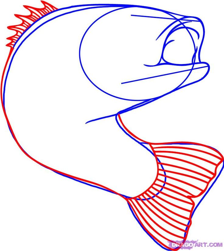 how to draw a bass fish step 3