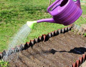 Нашатырь - это не только одно из важных средств в дачной аптечке, но ещё и прекрасный помощник дачника на огороде. Чем же он нам так полезен - расскажем в нашей заметке..Нашатырь - источник азота для растений..Вспомним, что нашатырный спирт - это н...
