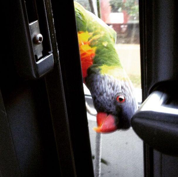 Little Don's Dad peeping through the door
