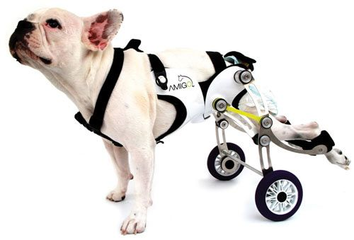 Nir Shalom created this dog wheelchair that allows the dog more mobility. Presented this past month in Milan, the device attaches to the hips and allows dogs to lay down, sit, and run around.