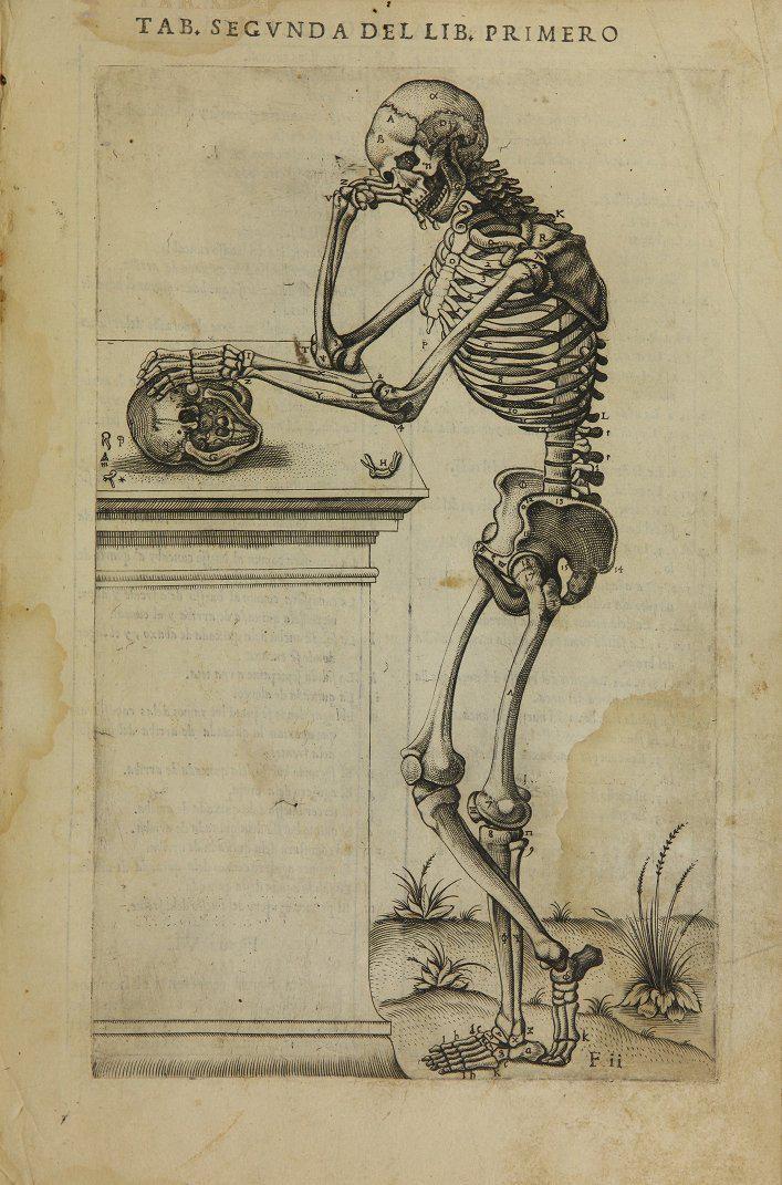 Pgina de quotAnatomia del corpo humanoquot del anatomista espaol