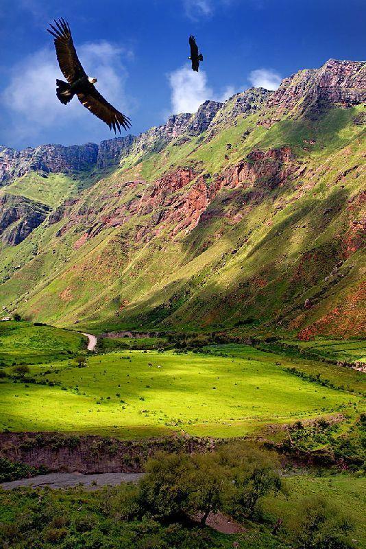Se trata de Salta en Argentina . Es muy bonito. Puede ver muchos animales aquí . Corren rápido.