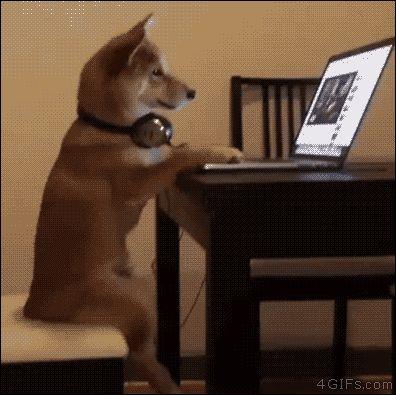 Seu cachorro é muito agitado? Dê um notebook pra ele para que se distraia. Sempre funciona. (Gifs)