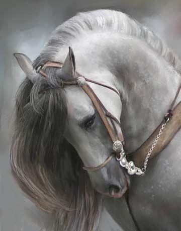 Beautiful Andalusian horse.