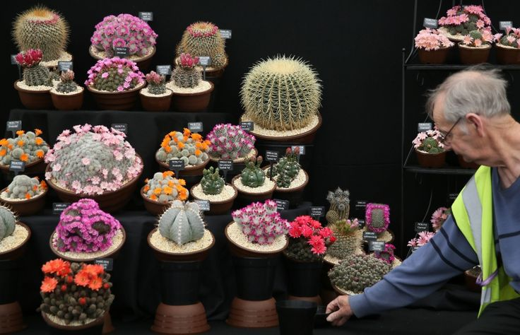 Chelsea Flower Show cactus display 2016