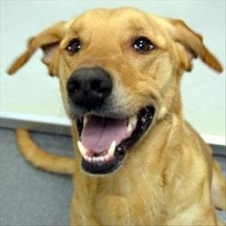 Jag is an adoptable Hound Dog in Des Moines, IA. Looking for a friend who will keep you active and off the couch? Check out Jag! This guy loves lots of exercise and would be great incentive to get out...