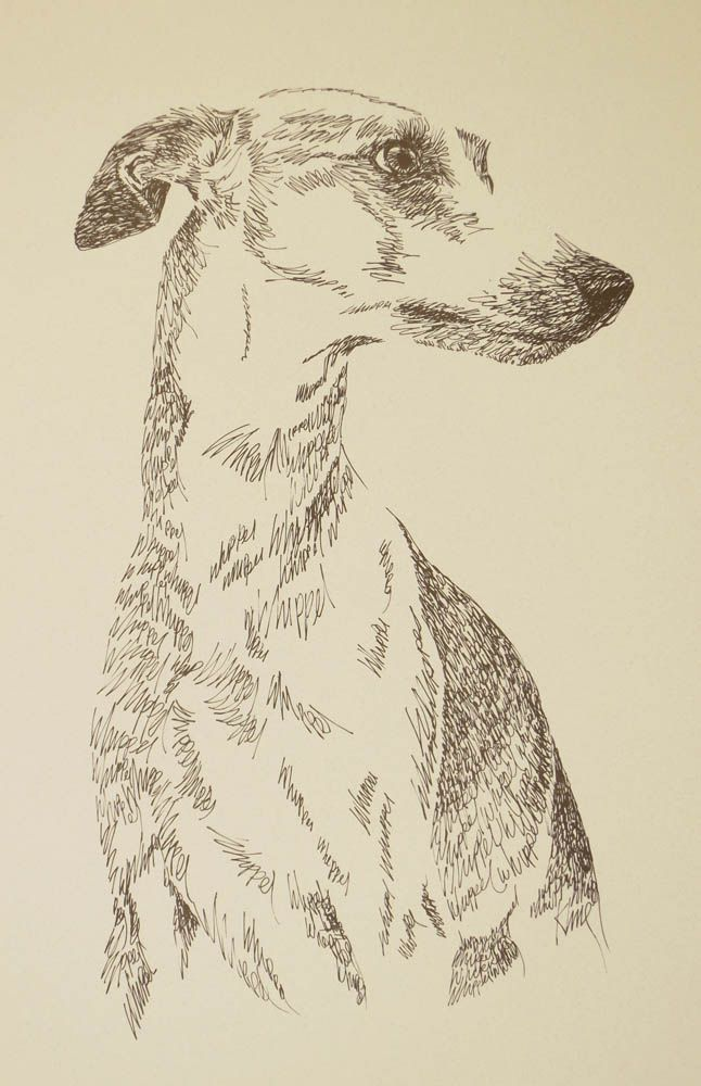 Whippet: Dog Art Portrait by Stephen Kline, art drawn entirely from the word Whippet. - drawDOGS.com His collectors number in the thousands from over 20 countries and every state in the US. Kline's dog art has generated tens of thousands of dollars for dog rescues worldwide.