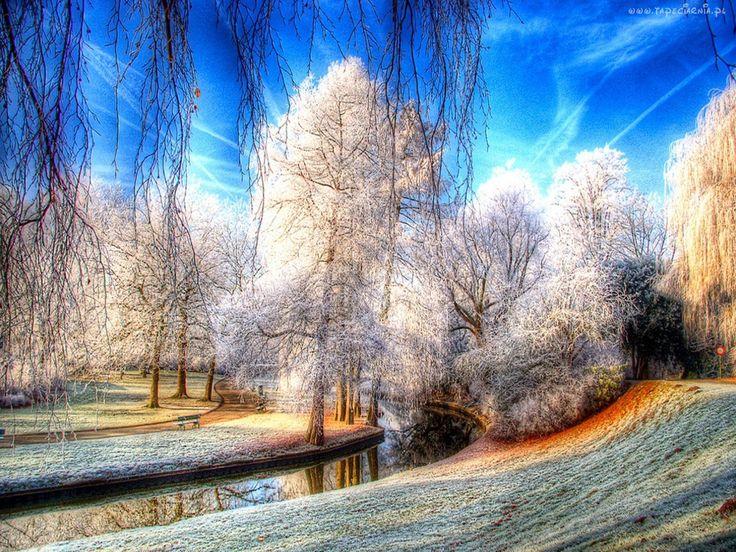 Park, Drzewa, Rzeczka, Szron