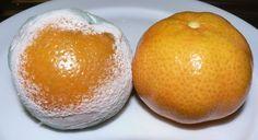 Las naranjas y el pan son dos de los elementos más comunes en la cocina familiar y son capaces de producir penicilina simplemente dejándolos...