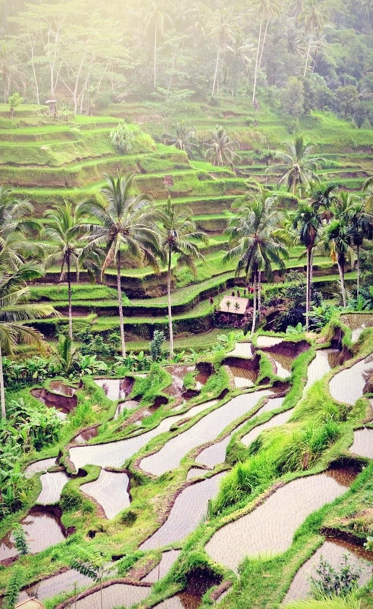 Stunning views at Tegalalang Rice Terraces near Ubud   One of 10 Top Things To Do In Bali Indonesia   via @Just1WayTicket