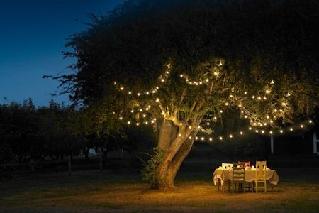 Fairy Lights Adelaide