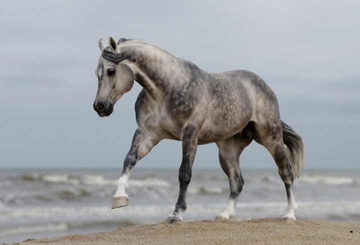 526 Best Images About Model Horses On Pinterest