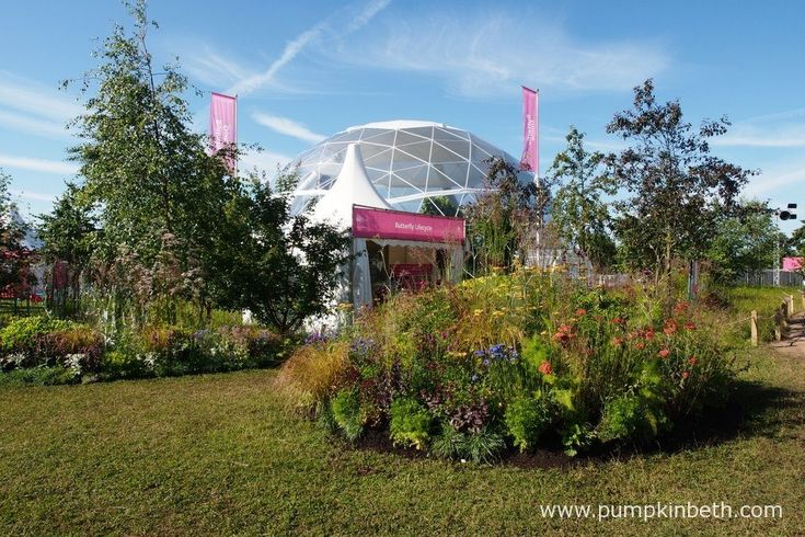 The Butterfly Dome at the RHS Hampton Court Palace Flower Show 2016 is a wonderful place to visit, you can see over thirty species of butterfly from Indonesia and South America in amongst tropical plants and trees.