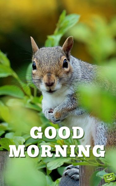 A New Day Starts!: Good Morning Pics.