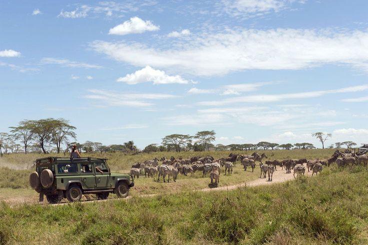 Tanzania Safari & Zanzibar Africa On this singles vacation we will take in the wonders of the amazing Ngorongoro Crater, the world famous Serengeti National Park, and the tree climbing lions of Lake Manyara, ending on the exotic island of Zanzibar.
