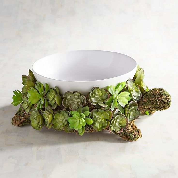 Succulent turtle serving bowl
