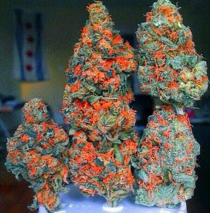 how to get my weed plant to bud
