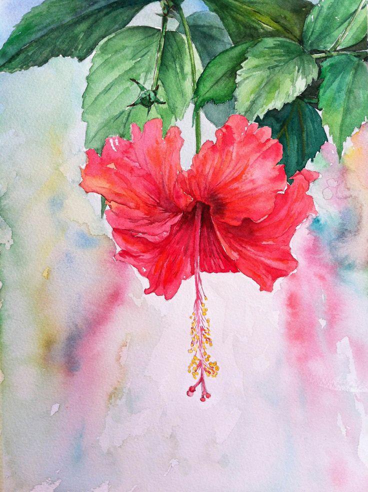 ดอกชบา ส น ำ ขนาด 21x29 Cm ดอกไม ส น ำ ภาพวาด ส น ำ