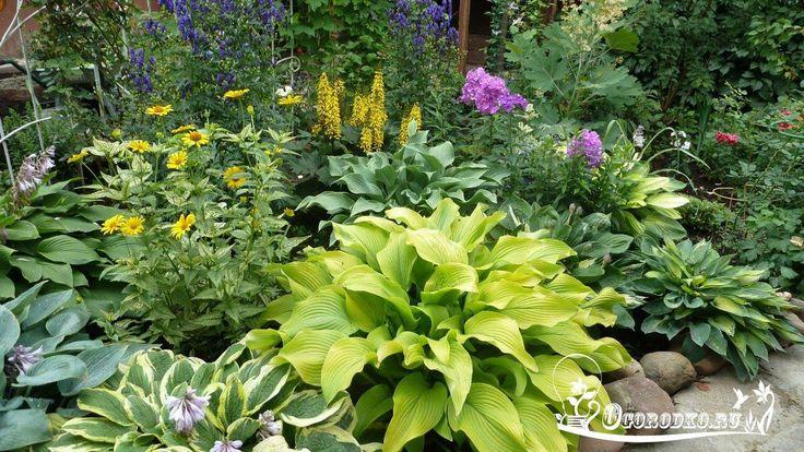ХОСТА, наша любимая    Хоста - декоративное корневищное растение, которое быстро разрастается в обширные плантации. Крупные листья хосты – ее главное украшение: они отличаются по форме, размерам и цветам в зависимости от сорта хосты. Садоводы любят хосту за неприхотливость и универсальность: хоста красива, холодостойка, засухоустойчива, растет на свету и в тени и отлично дополняет другие растения.    Родина хосты (Hosta) – Япония, Корея и Китай. Многочисленные виды хосты (по разным…
