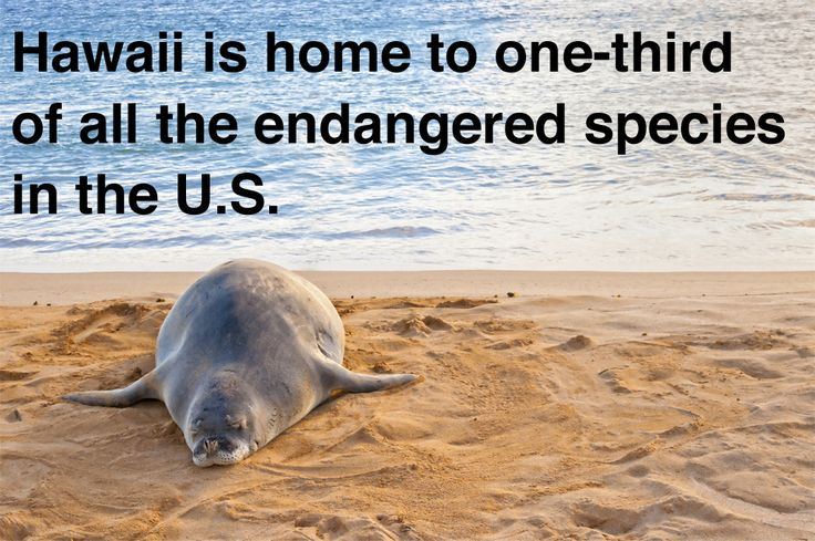 (some of this list is wrong, but some are right, so before you take these as fact, remember, it's Buzzfeed :-P ) #Kauai #Hawaii Sadly, Hawaii is also the location of a huge amount of already extinct species... http://en.wikipedia.org/wiki/List_of_extinct_animals_of_the_Hawaiian_Islands
