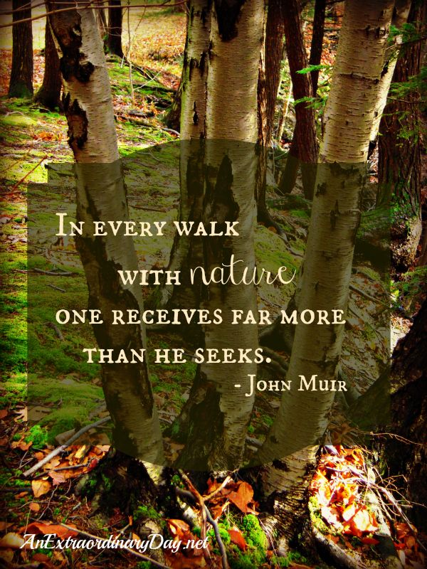 AnExtraordinaryDay.net   In every walk with nature one receives far more than he seeks.  ~John Muir