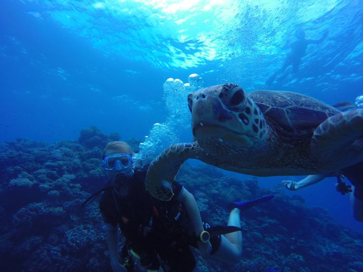 Cook Islands, New Zealand & Australien.travel. travling. Diving. Turtle. Water