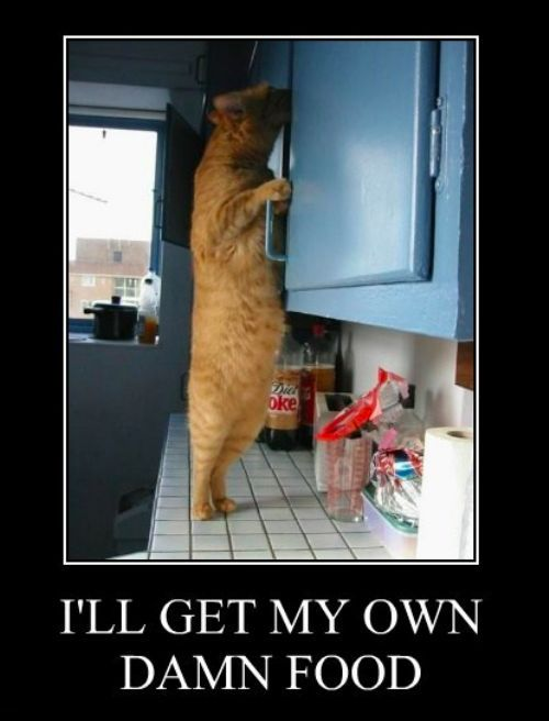 Independent kitty.Laugh, Funny Pictures, Funny Cat, Funnypictures, Damn Food, Fat Cat, Humor, Funny Animal, Kitty
