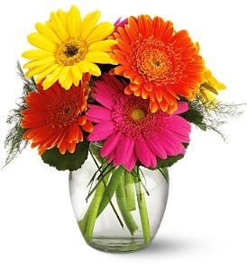 Gerberas in Vase. Many color options available.