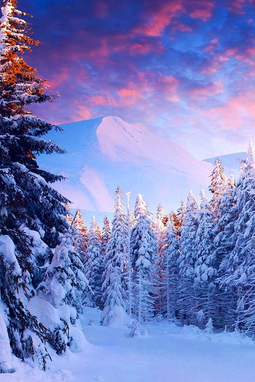 Snow Forest, The #Alps