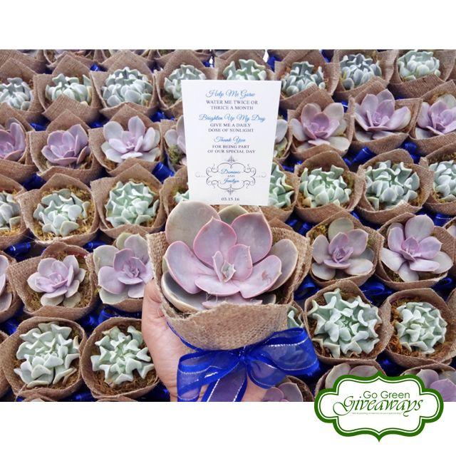 Succulents wedding favors  Succulents Philippines PVN Topsy Turvy