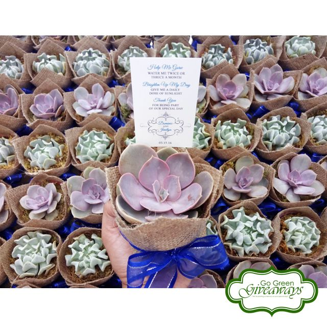 Succulents wedding favors  Succulents Philippines PVN Topsy Turvy
