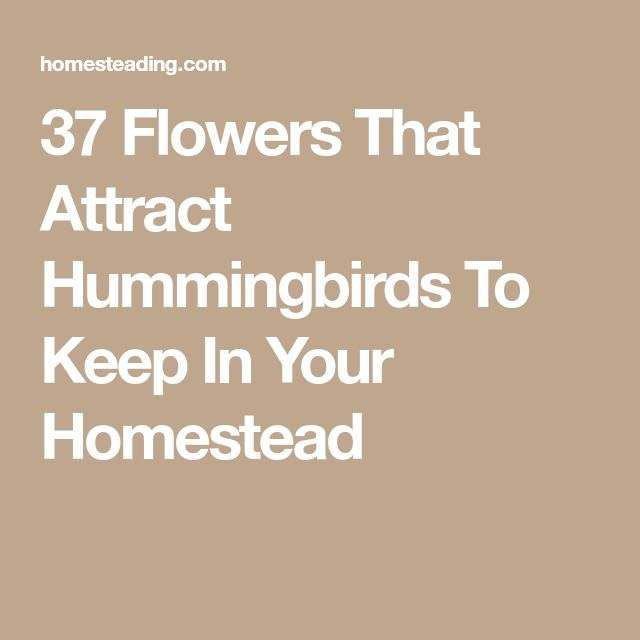 37 Flowers That Attract Hummingbirds To Keep In Your Homestead