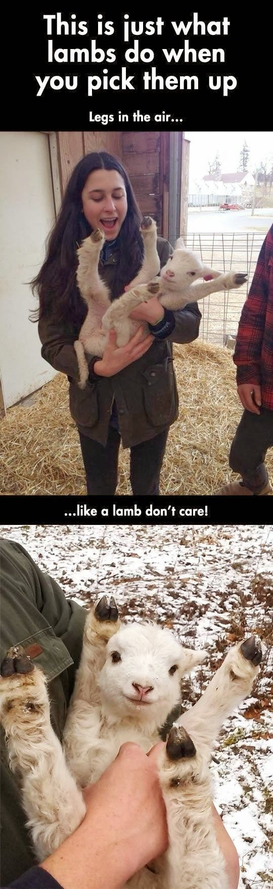 I need to pick up a lamb now.