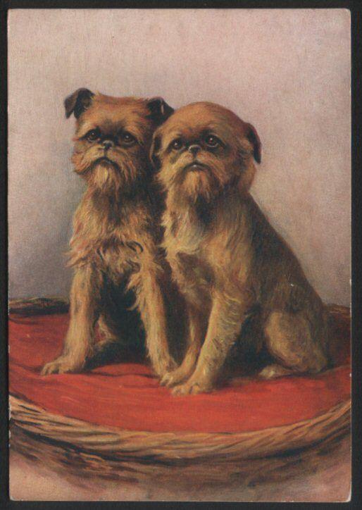 Griffon Bruxellois Tobacco card postcard dogs 1930's