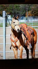 Whether you have one horse or a dozen, having a no-fuss way to tie them out simplifies your time on the ground and reinforces lessons of patience and tolerance. It is well known in the horse industry