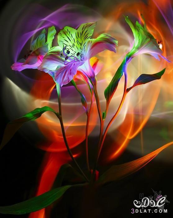 خلفيات ورد Hd للتصميم2017 صور ورد للفوتوشوب 2019 خلفيات ورد للربيع2017 Cross Paintings Fractal Art Embroidery Flowers