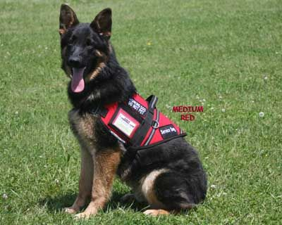 S Amp R Style Vest Search Amp Rescue Dog Products Dogs
