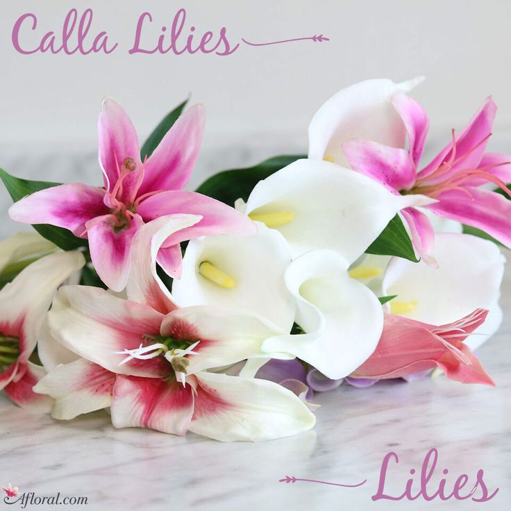 The Calla Lily represents purity & magnificent beauty. Whether you're looking for realistic silk calla lilies, artificial calla lily bouquets, or bulk single stem callas, Afloral.com has the flowers you need.