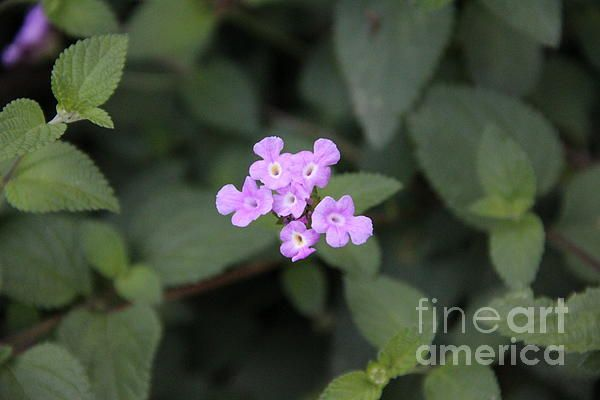 tiny purple flower close up photography in Spain