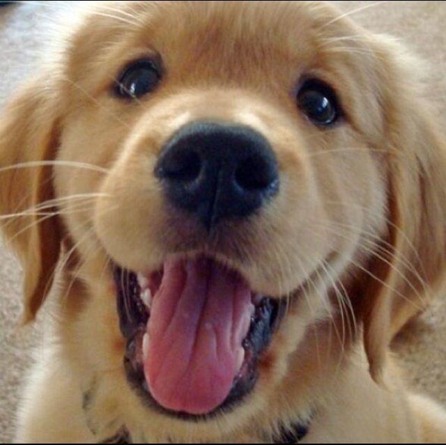 216 best images about puppy love on pinterest. Black Bedroom Furniture Sets. Home Design Ideas